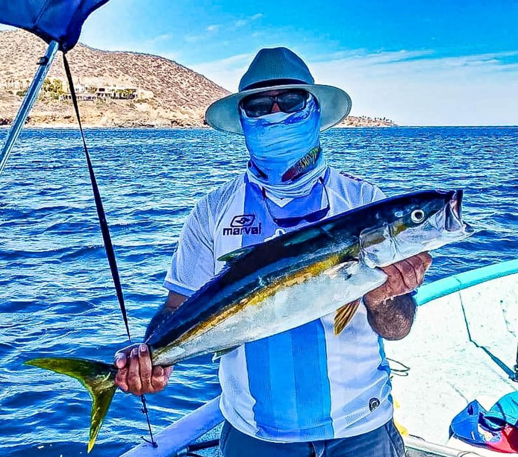 La Paz yellowtail